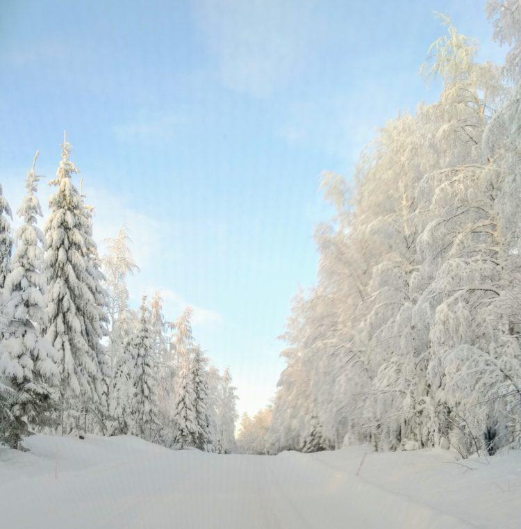 Talvikuva_nettisivuille